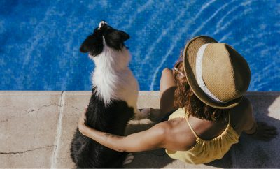 Going on holiday with your dog or cat in Provence